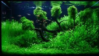 Aquascaping Fish Beautiful Aquascapes Gallery Aquaec Tropical Fish