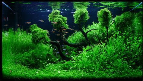 aquascape wallpaper after scouring the internet i have put together a gallery
