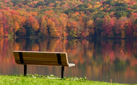 bench in nature landscapes nature trees bench wallpaper 2560x1600
