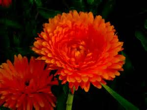flowers pictures thom zehrfeld photography cool flower pictures