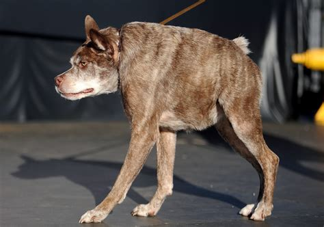 ugliest breed 10 breeds you need to see to believe pets world