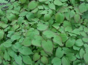 cover garden maine