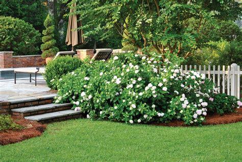 Garden Improvement Ideas Scaping Capital Low Maintenance Landscaping Plants