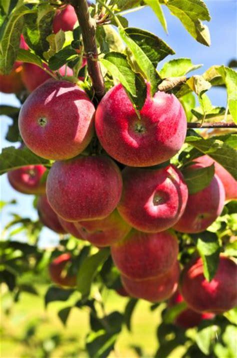 fruit tree care fruit tree service pest patrol