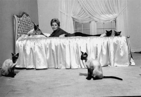 kim novak cat celebrity cats