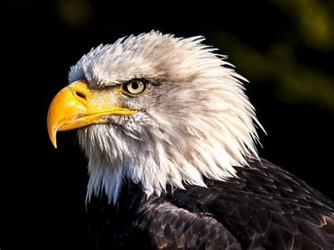 les animaux sauvages  observer dans louest americain