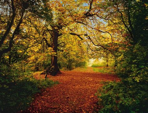 Murals For Outside Walls uk store photo wallpaper autumn forest scene wall mural