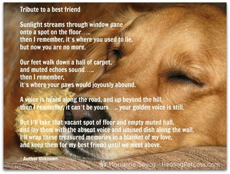 comforting quotes about death of a dog 25 best ideas about loss of pet on pinterest dog loss