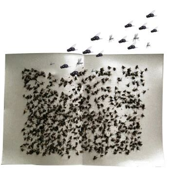 How To Make Sticky Fly Paper - 30 pcs strong flypaper sticky fly paper flytrap green