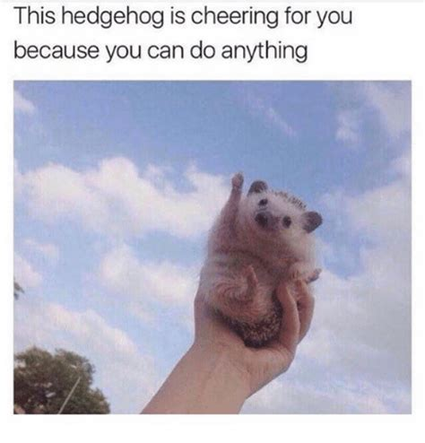 What Can You Do Meme - this hedgehog is cheering for you because you can do