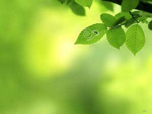 wallpaper daun merambat 13 slide hijau yang bagus dengan gambar latar belakang