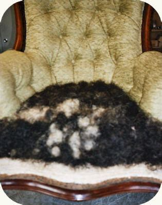 horsehair upholstery stuffing armchair upholstered using green chenille and horse hair