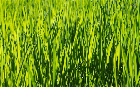 green grass wallpaper green grass wallpaper nature wallpapers 2310