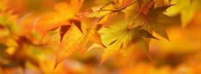 15 photos de couverture automne