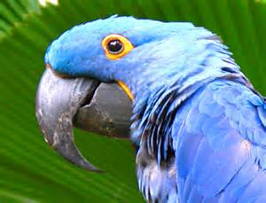 What Animals Live In The Rainforest Canopy by Animals Of The Rainforest In Har