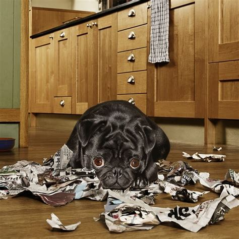 things to when getting a puppy important things to consider before getting a housekeeping
