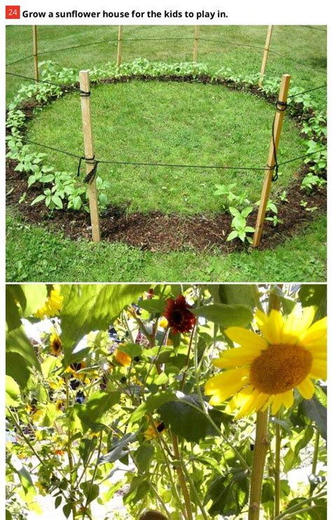 Sunflower Garden Ideas Best 25 Sunflower House Ideas On Pinterest Gardening Garden Ideas And Growing Vegetables