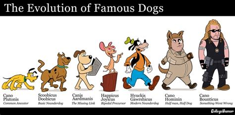 the evolution of dogs the evolution of dogs