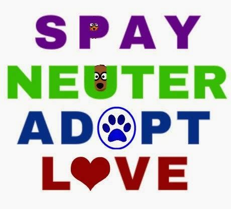 spay cost pets n more list of free to low cost spay and neuter clinics