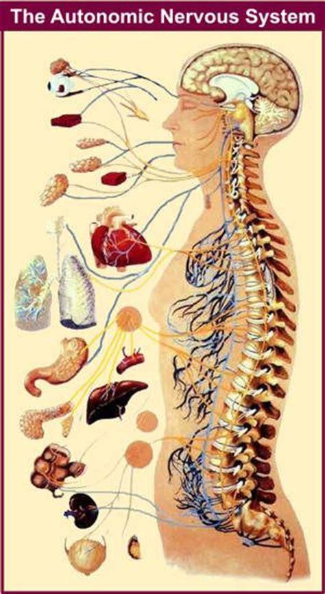 Detox Nervous System by Best 20 Autonomic Nervous System Ideas On