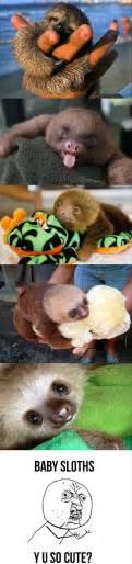 Baby Sloth Meme - the baby sloths funny meme dump a day