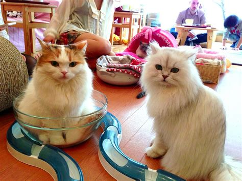 Feline Inspired Speakers From Japan by Cat Cafe Offers Purrfect Blend Adoption With A Side