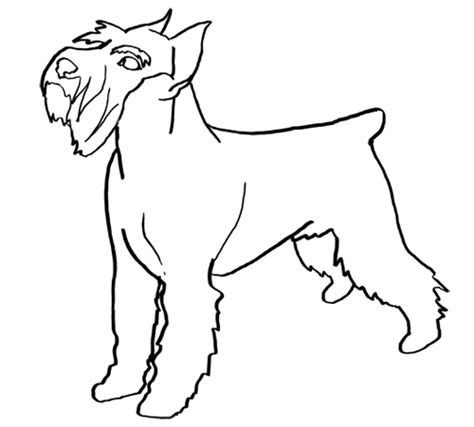 miniature schnauzer coloring pages coloring pages