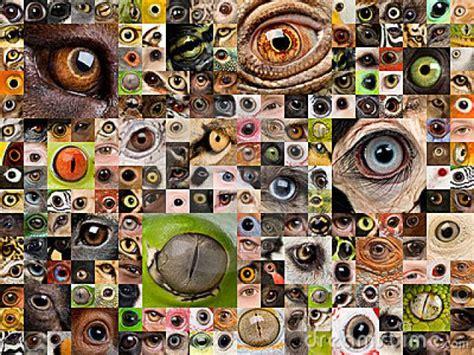 imagenes ojos de animales lista asombrosos ojos del reino animal