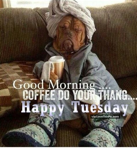 happy tuesday meme 17 best ideas about happy tuesday meme on