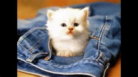 imagenes de gatitos blancas tiernas fotos tiernas de perritos y gatitos aww youtube