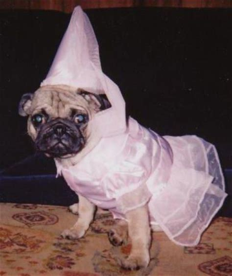 princess pug 16 best images about to cut pugs on pug donkeys and plush