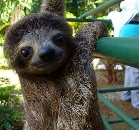 cute sloths   brighten  day cute cute