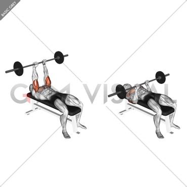 70 pound dumbbell bench press barbell jm bench press