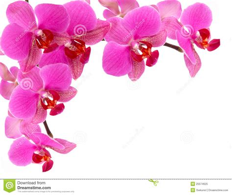 orchideen gestell orchid frame royalty free stock photo image 25574625