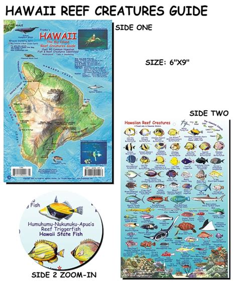 the ultimate guide to hawaiian reef fishes sea turtles hawai i reef creatures guide fish card