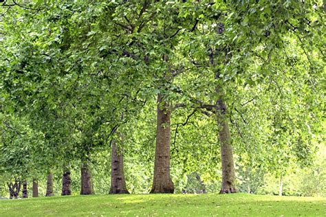 the about trees superiorlawnservices grove of trees