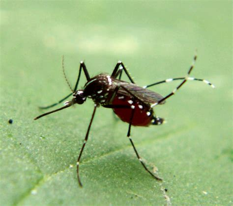 Controlling Mosquitoes In Backyard by South Walton County Mosquito District