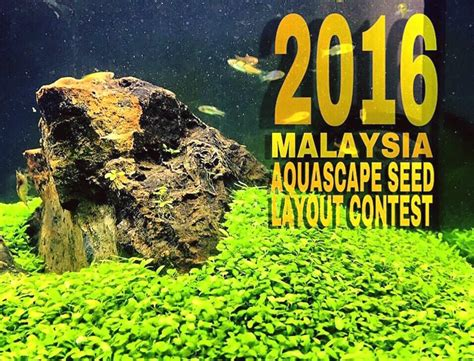 aquascape malaysia indonesian aquascaping journal