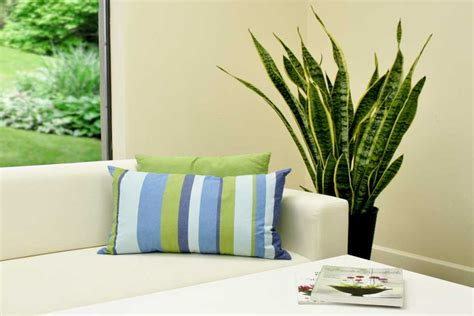 indoor foliage plants tropical and indoor foliage plants emerge as a lifestyle