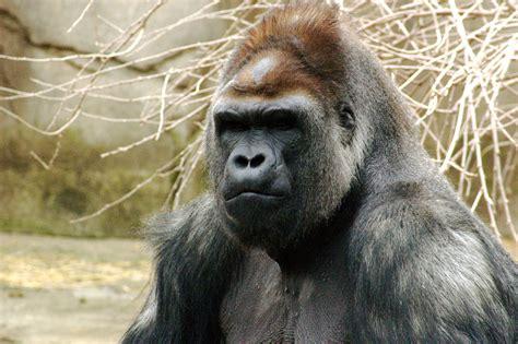 bentley orangutan 人類学研究 時空を超えて 人類進化システム分野 先史人類学 米田研究室