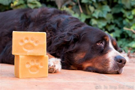 how often do dogs get their period how to make a shoo bar soap oh the things we ll make