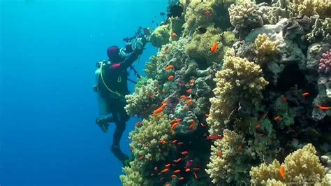 dive sea scuba diving sea underwater hd
