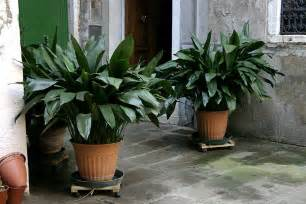 indoor plants for cats 7 indoor plants that are safe for pets also improve our