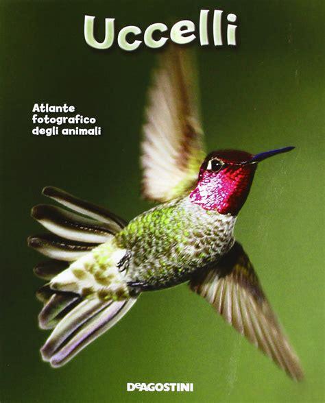 animali volanti colibr 236 trochilidae scheda completa animali volanti