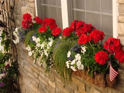 window box plants for sun sun white and blue window box 4th of july