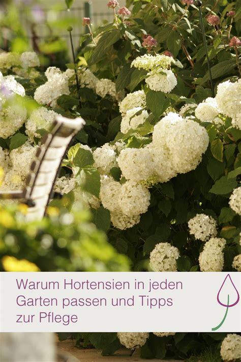 Pflege Hortensien Im Topf 4640 by Die 25 Besten Ideen Zu Hortensien Garten Auf