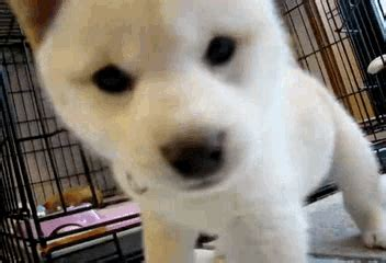 gif puppy puppy gif find on giphy