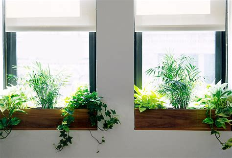 window sill planter indoor the sill terrain planting a window box the blog at