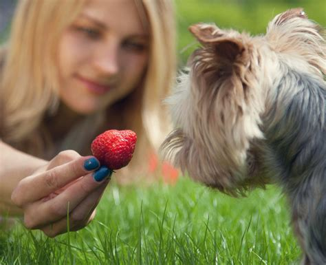 fruit for dogs fruit loops for your