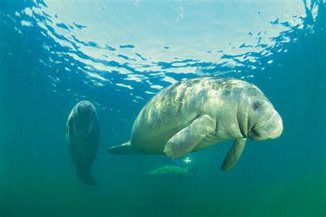 quanto costa l ingresso all acquario di genova offerte acquario di genova sconti per l acquario di
